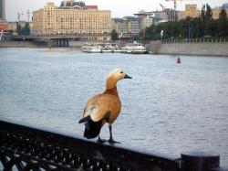 Москва-река превратится в стройплощадку?