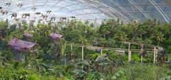 Большой парк Сеула – реконструкция