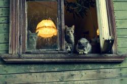 7 вопросов Анфисе Болдыревой, бездомной