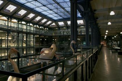 Реновация Большой галереи эволюции Музея естественной истории