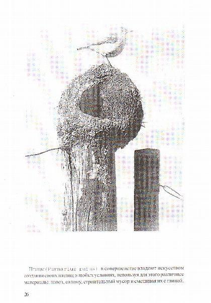 Птицы (Furnarius rufus) в совершенстве владеют искусством создания своих жилищ в любых условиях, используя для этого раздичные материалы: навоз, строительный мусор и смешивая их с глиной.