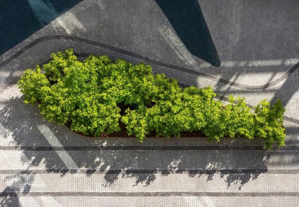 «Сад сосуществования» Фото © Алік Усік