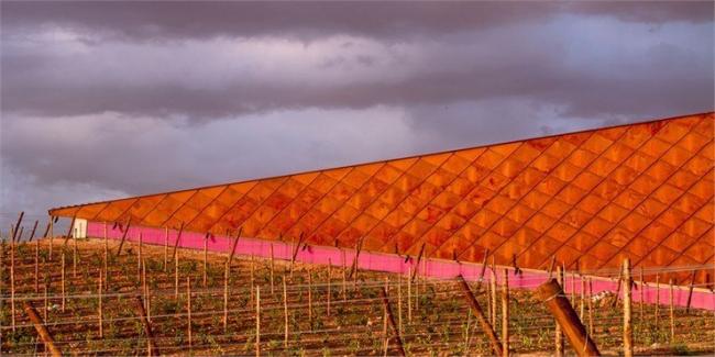 Винодельня Фаустино. Фото © Nigel Young