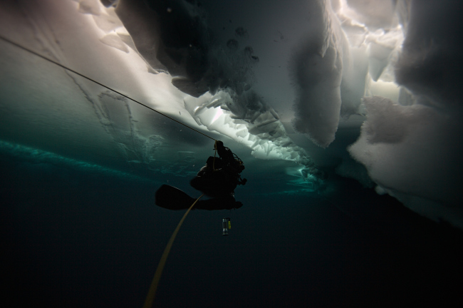 Кадр из фильма про подводную экспедицию во льдах Антарктиды