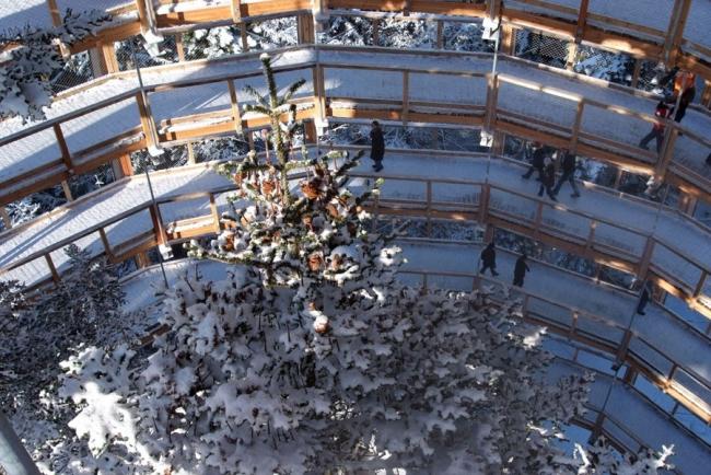 Обзорная башня Baumwipfelpfad Иллюстрации с сайта baumwipfelpfad.by