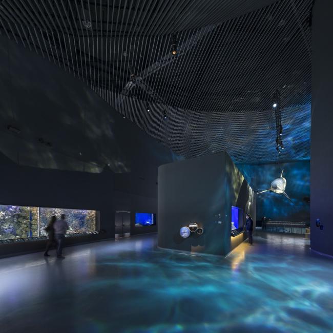 Аквариум «Голубая планета» © Adam Mørk