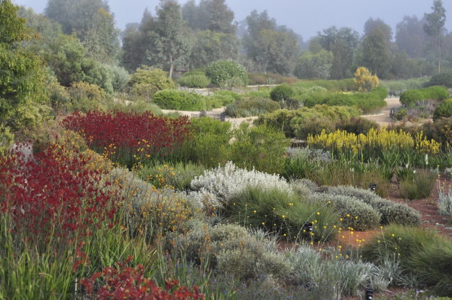 «Ландшафт». Ботанический сад «Австралийский сад» в Крэнборне бюро Taylor Cullity Lethlean + Paul Thompson. Предоставлено WAF