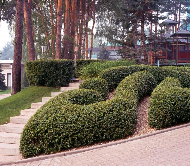 Московская область. Горки 2. Нижний сад. Лабиринт © Ландшафтная компания ARTEZA