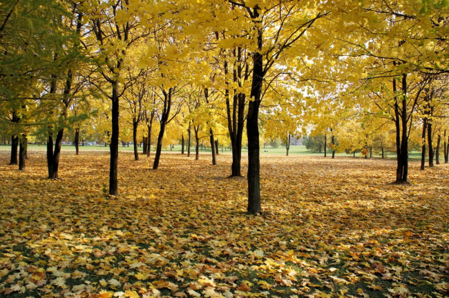 Парк Садовники. Существующее положение. Источник: ru.wikipedia.org
