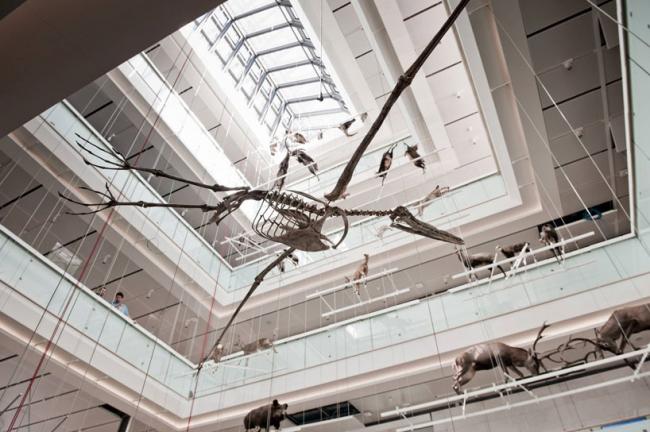 Музей науки MUSE © Alessandro Gadotti