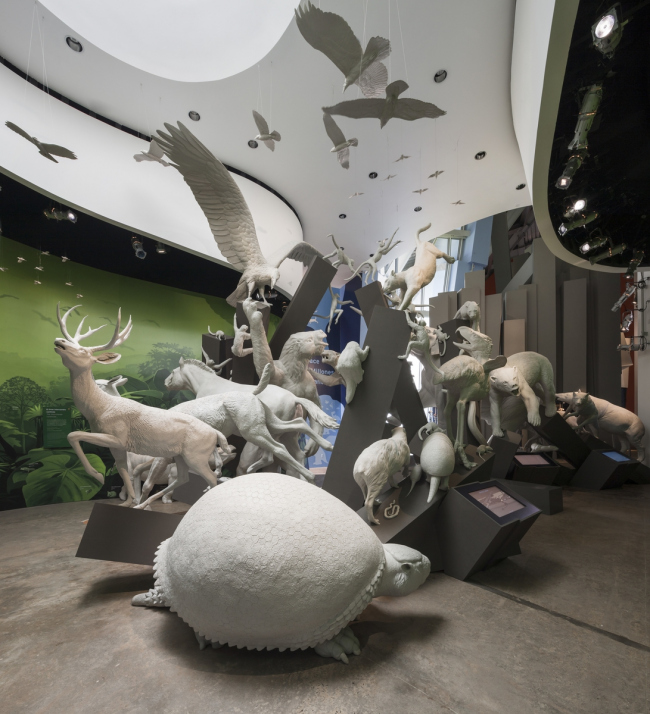 Biomuseo – музей биоразнообразия. Фото © Fernando Alda / Fundación Amador. Предоставлено Biomuseo