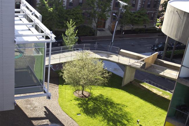 Музеи искусств Гарвардского университета – реконструкция. Фото: Zak Jensen