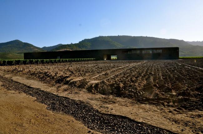 Винодельня «Доминус» в долине Напа. Фото: Sarah Ackerman via flickr. com. Лицензия Creative Commons