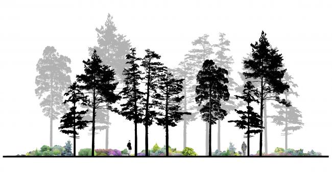 "Section of the boulevard with an extra medium green belt. Concept of ""Dinamo"" Boulevard. Author: Ksenia Zvereva"