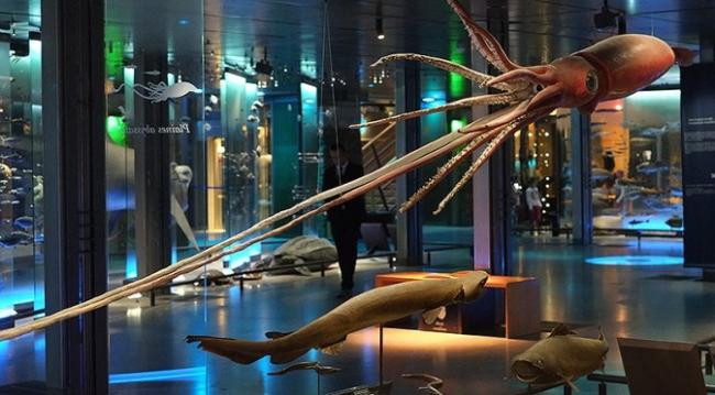 Зал обитателей подводного мира © MNHN – Bernard Faye архитекторы Paul Chemetov Borja Huidobro- ADAGP