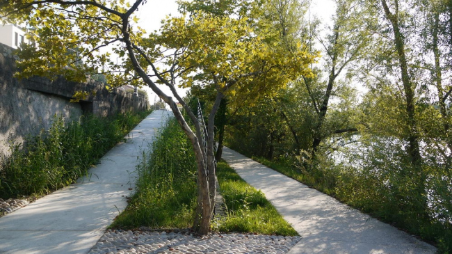 Набережная реки Сона в Лионе © BASE