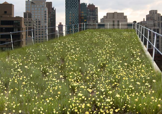 Фото цветущий луг на крыше © Университет Мельбурна