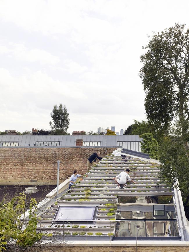 Дом Garden House в Хакни, Лондон.  Hayhurst and Co. Фото © Killian O′Sullivan
