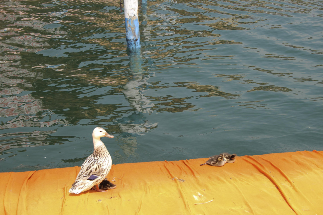 Христо и Жанна-Клод. «Плавучий пирс» на озере Изео © Елизавета Клепанова