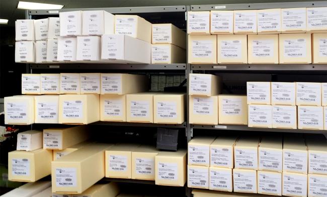 Хранилище международного архива IAWA / предоставлено Анной Соколиной