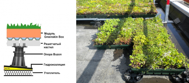 Устройство зеленых кровель на регулируемых опорах Buzon. Фотография предоставлена компанией Buzon