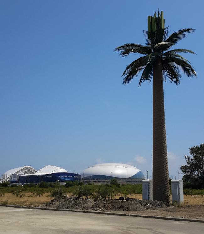 Самое большое дерево на курорте – искусственная пальма с передающими антеннами. Фотография: Мария Трошина