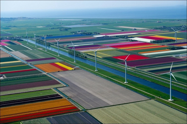 Голландия. Поля с тюльпанами и каналы.