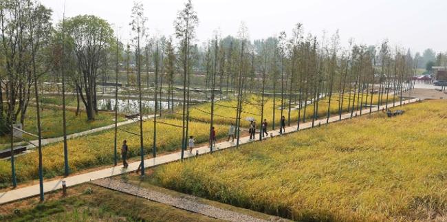 Восстановленный археологический ландшафт городища Чэнтоушань (Китай).  Turenscape. Изображение предоставлено WAF
