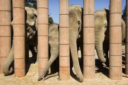 «Дом слонов» в Копенгагенском зоопарке. Фото © Lina Ahnoff