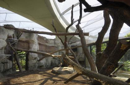 Жилище обезьян «Боргоривальд» в зоопарке Франкфурта