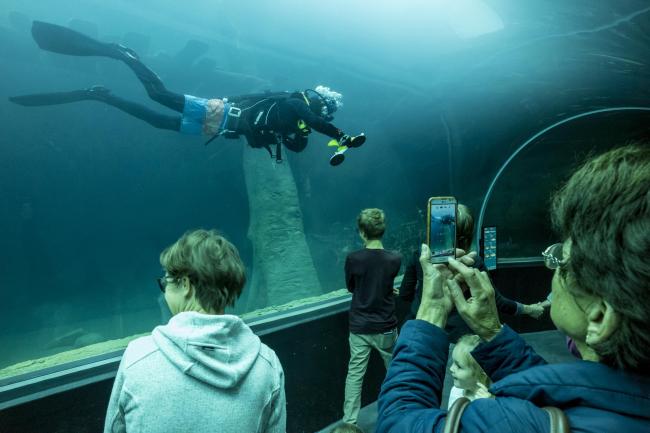 Аквариум Aquatis. Фото © Fernando Guerra | FG+SG