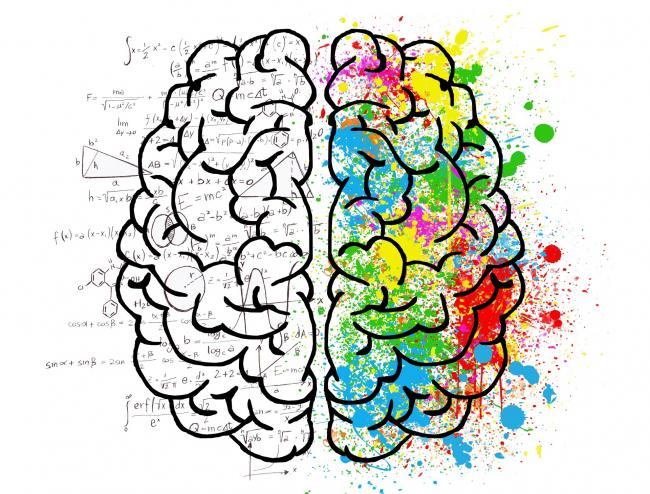 Brain. Изображение находится в свободном доступе. Автор ElisaRiva