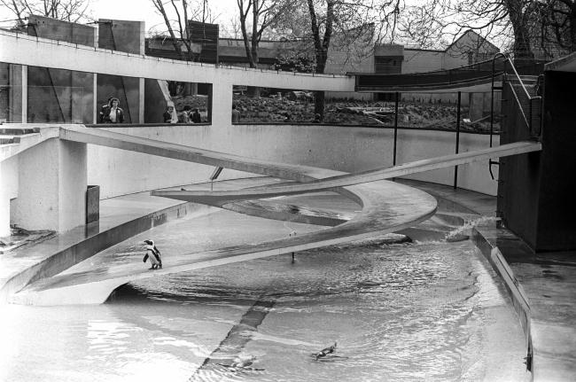Вольер для пингвинов в Лондонском зоопарке. Архитектор Бертольд Любеткин. Лицензия CC BY-SA 4.0. Автор фотографии gillfoto