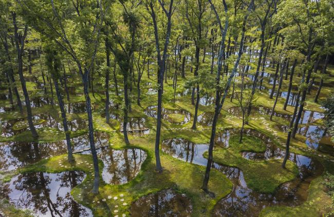 Водный сад в арт-резиденции Art Biotop Nasu. Фото © Nikissimo Inc.
