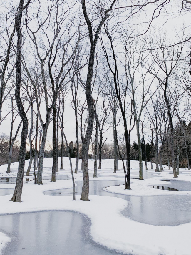 Водный сад в арт-резиденции Art Biotop Nasu. Фото © Junya Ishigami + Associates