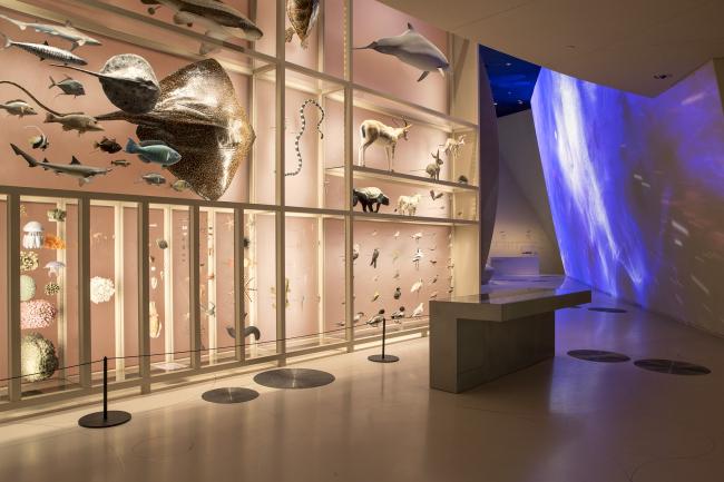 Национальный музей Катара