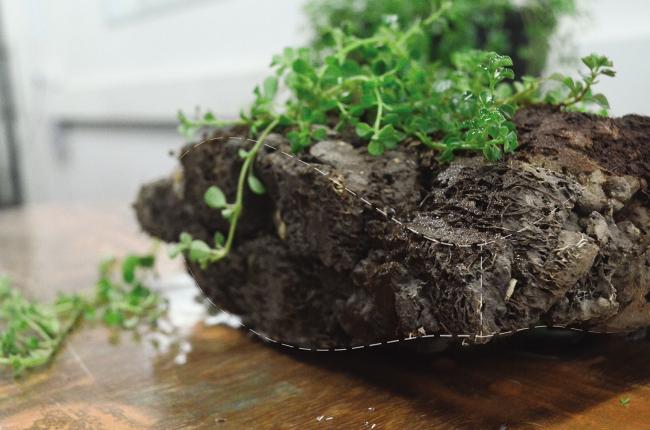«Зеленый древесный уголь», автор проекта: Шреяс Мор
