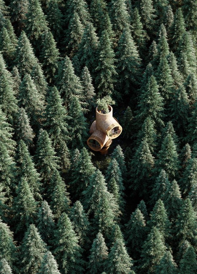 Дом на дереве «Берт»