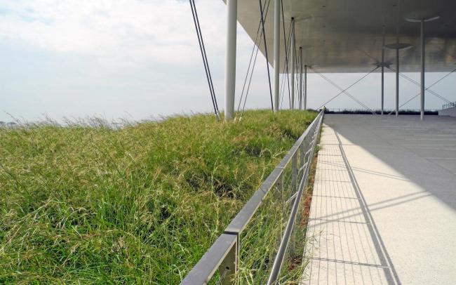 Травы растут вокруг  террасы на крыше. Система ZinCo