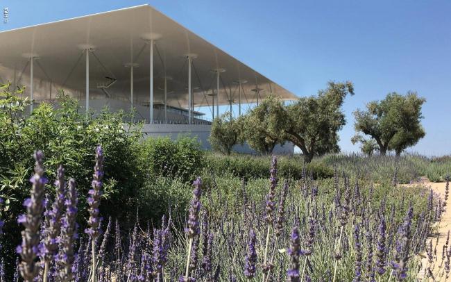 Лаванда и оливы – символы средиземноморья