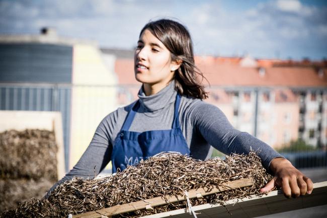 Проект «Архитектура из морских водорослей» / Seaweed Architecture