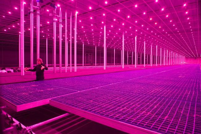 «Новая природа»: стерильные пространства, предназначенные для получения идеальной органики. Countryside, The Future. Выставка Рема Колхаса в музее Гуггенхайма в Нью-Йорке