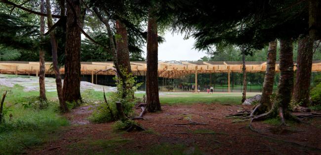 Лес. Ландшафтно-архитектурная концепция парка «Тучков буян»