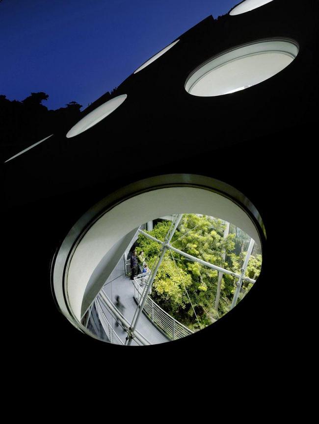 Калифорнийская Академия наук © Tim Griffith