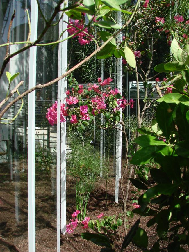 Цветы вокруг павильона Японии