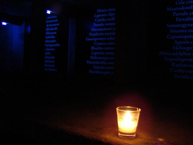 Сад девственниц на краю Арсенала. Проект «Сквозь Рай» Густафсонов. Свечи и список исчезнувших видов в бывшей часовне (?)