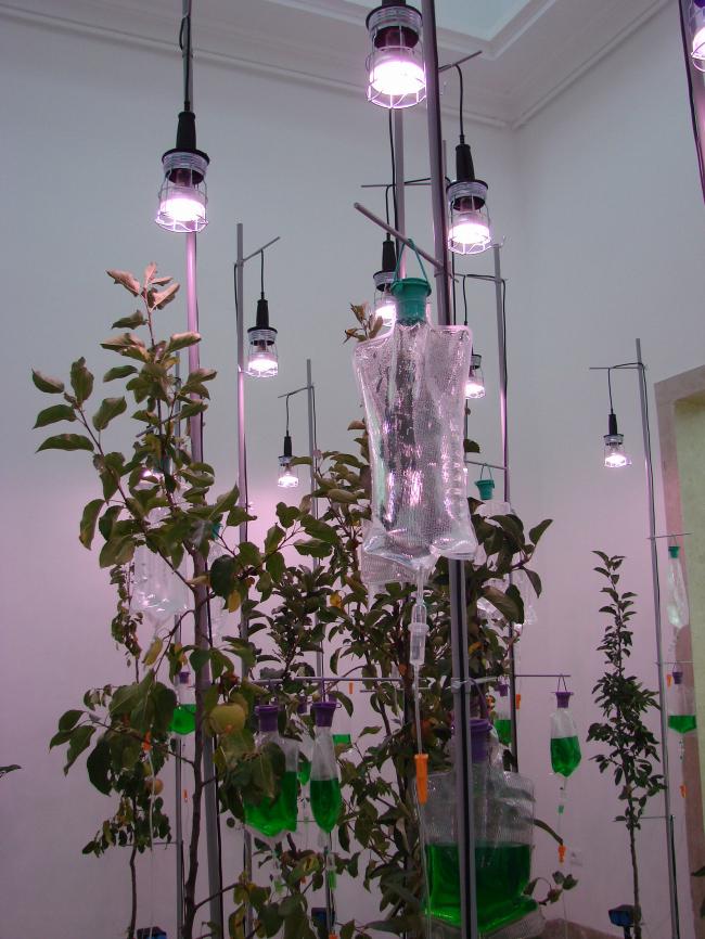 Райские яблочки под капельницами в павильоне Германии. Иллюстрация конфликта техногенного и первозданного Рая