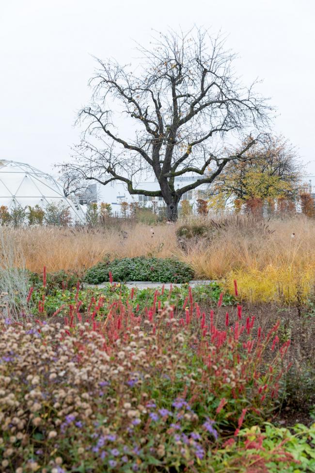 Сад Пита Аудолфа на кампусе Vitra