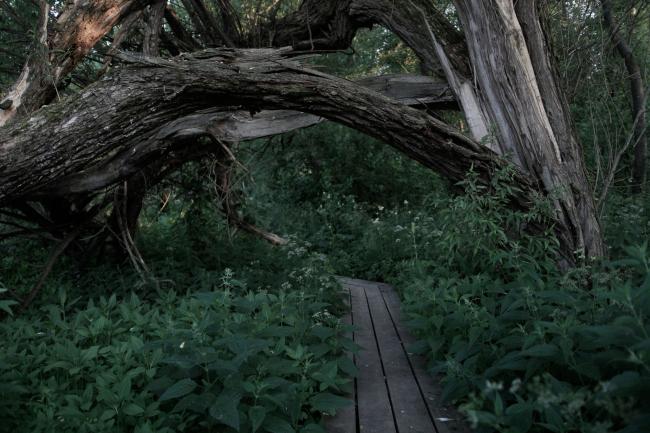 Арка-ива на входе в парк. По словам Григория Ревзина, вход из сломанной ивы похож на арку грота и таким образом весь парк за ней – это пространство грота, обиталища нимф и прочей болотной нечисти. Парк Александра Бродского в Веретьево