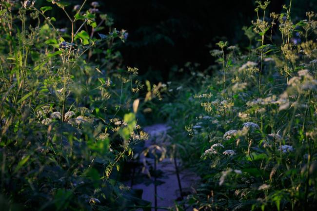 На входе в парк вечером. Купырь в косом свете. Парк Александра Бродского в Веретьево